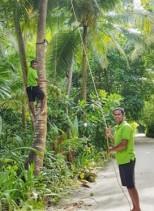 Cococut Climber 1